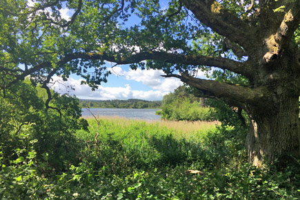 View through woods to Frensham Great Pond