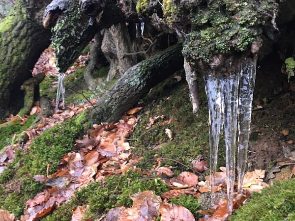 2021 Covid runs - icicles at Whitemore Vale Road, heading up towards Grayshott by Debbie Walton